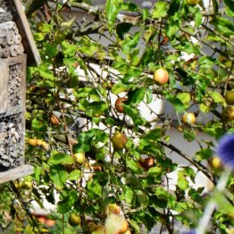 Naturschutz Bienenhotel